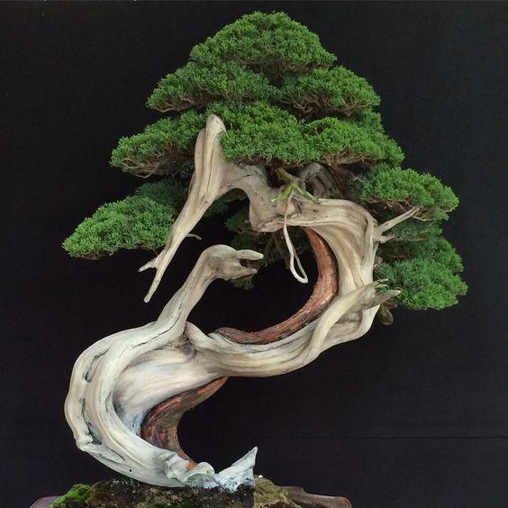 999 + Mẫu cây cảnh bon sai Nghệ Thuật Đẹp Mê mẩn hồn người EVA Nào cũng mong có 1 cây để bàn