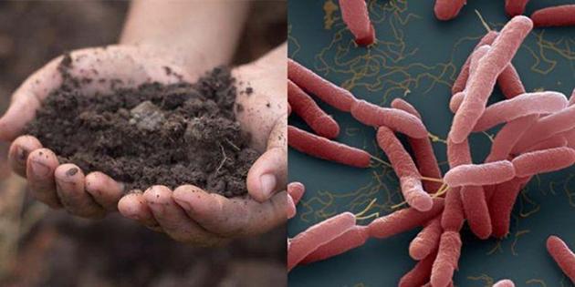 """Tìm thấy vi khuẩn """"ăn thịt người"""" Whitmore trong đất của gia đình có 3 trẻ tử vong tại Sóc Sơn"""