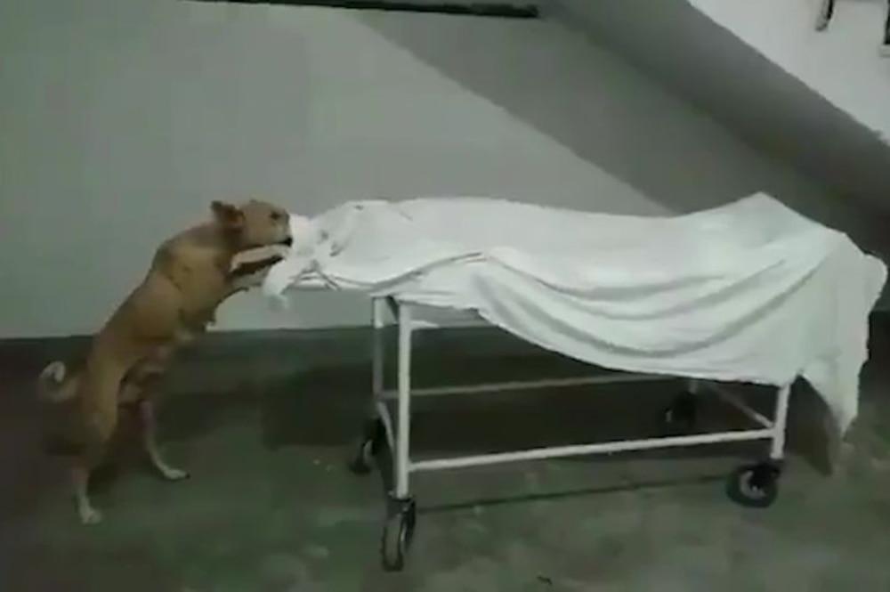 Xót xa khoảnh khác chó hoang gặm xác bé gái bị bỏ rơi trên cáng trong bệnh viện